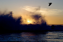 Crashing Waves and Bird